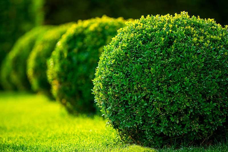 Bepflanzung Berisha Gartengestaltung