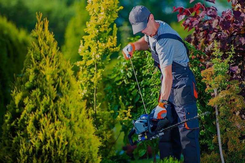 Gartengestaltung und Pflege