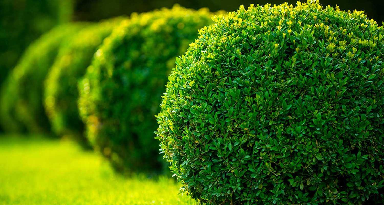 Berisha Gartengestaltung