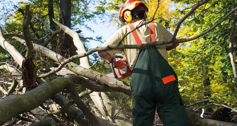 Baumsanierung